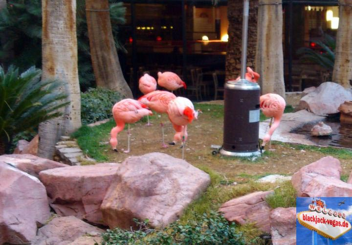 las-vegas-attraktion-flamingos