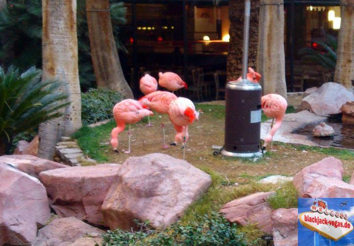 las-vegas-attraktion-flamingos